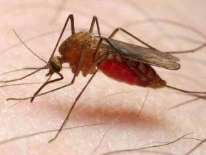 mosquito-48fc799e70f6892f5c6708a44bfde3a63681f80b-s6-c30