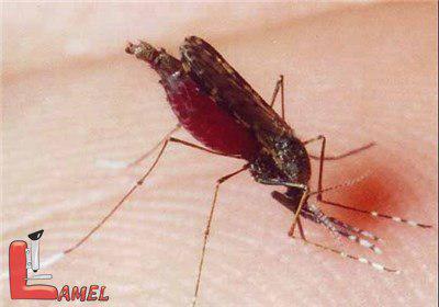 آشنایی با سوپر مالاریا / نکات مهم در مورد مالاریا