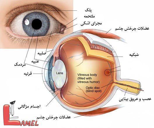 اطلاعاتی در مورد سرطان چشم و انواع آن / سرطان چشم کودکان / رتینوبلاستوما علت و درمان
