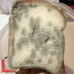 ریزوپوس چیست؟ / نکاتی مهم در مورد کپک سیاه نان